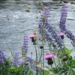 RiverSpey Wildflowers Summer2018