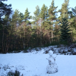 Guest Snow Sculpture
